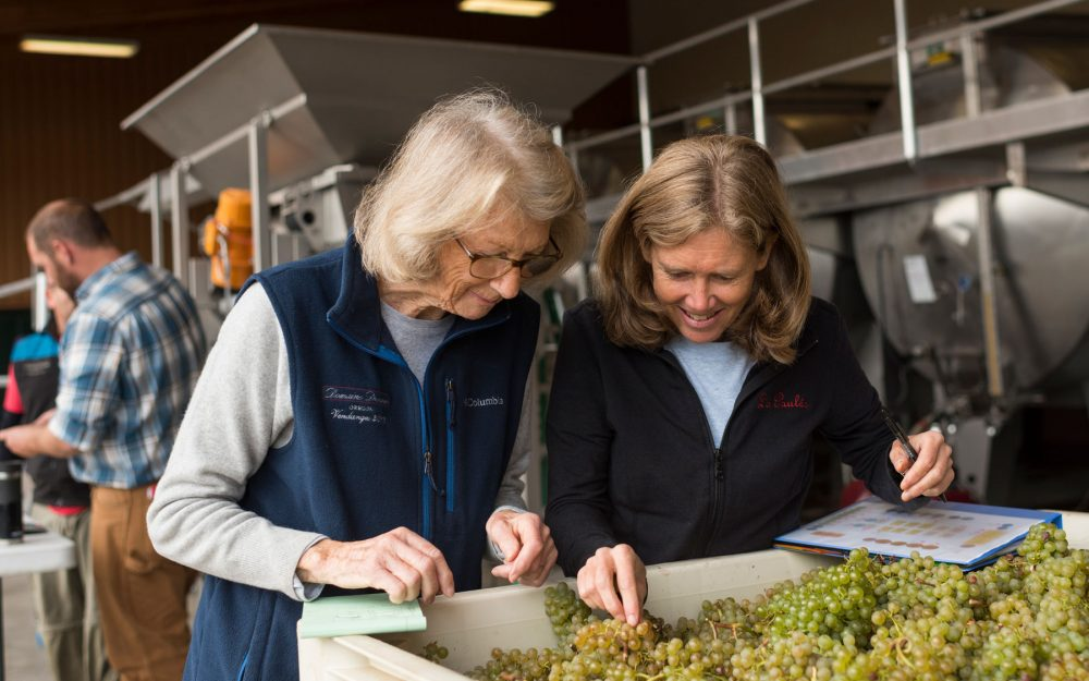 Ladies tasting white grapes from bin