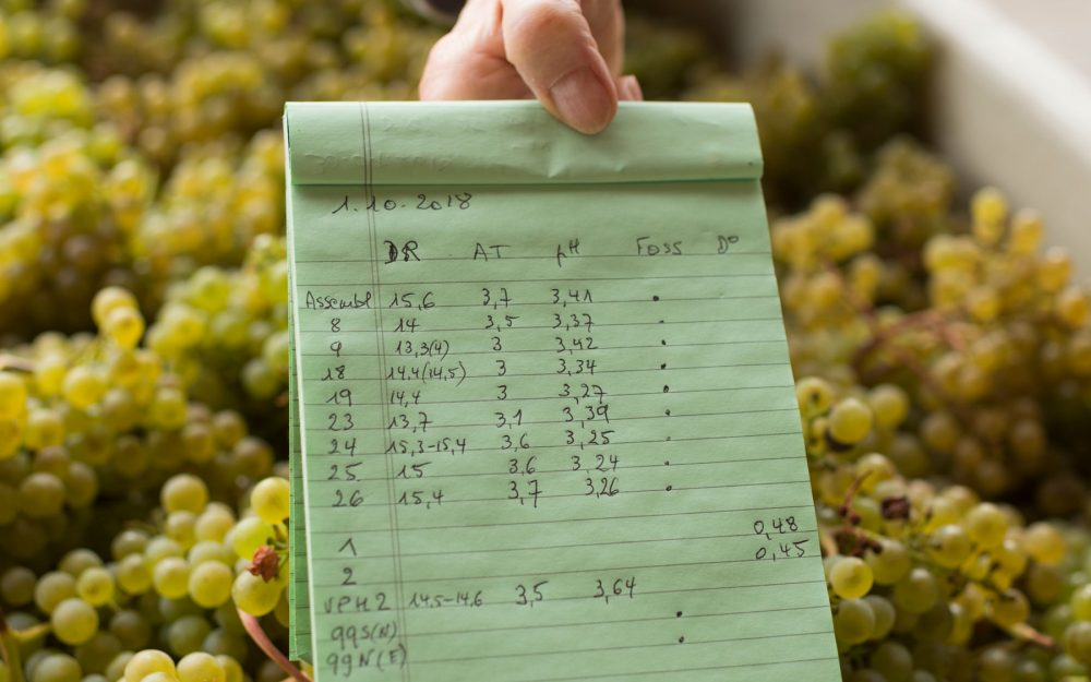 2018 vintage data on a green legal pad over bin of white grapes