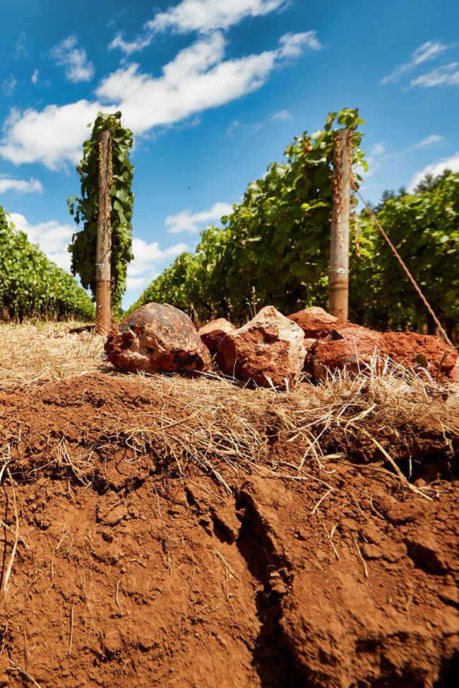 End of vine rows with rocks and red clay soil