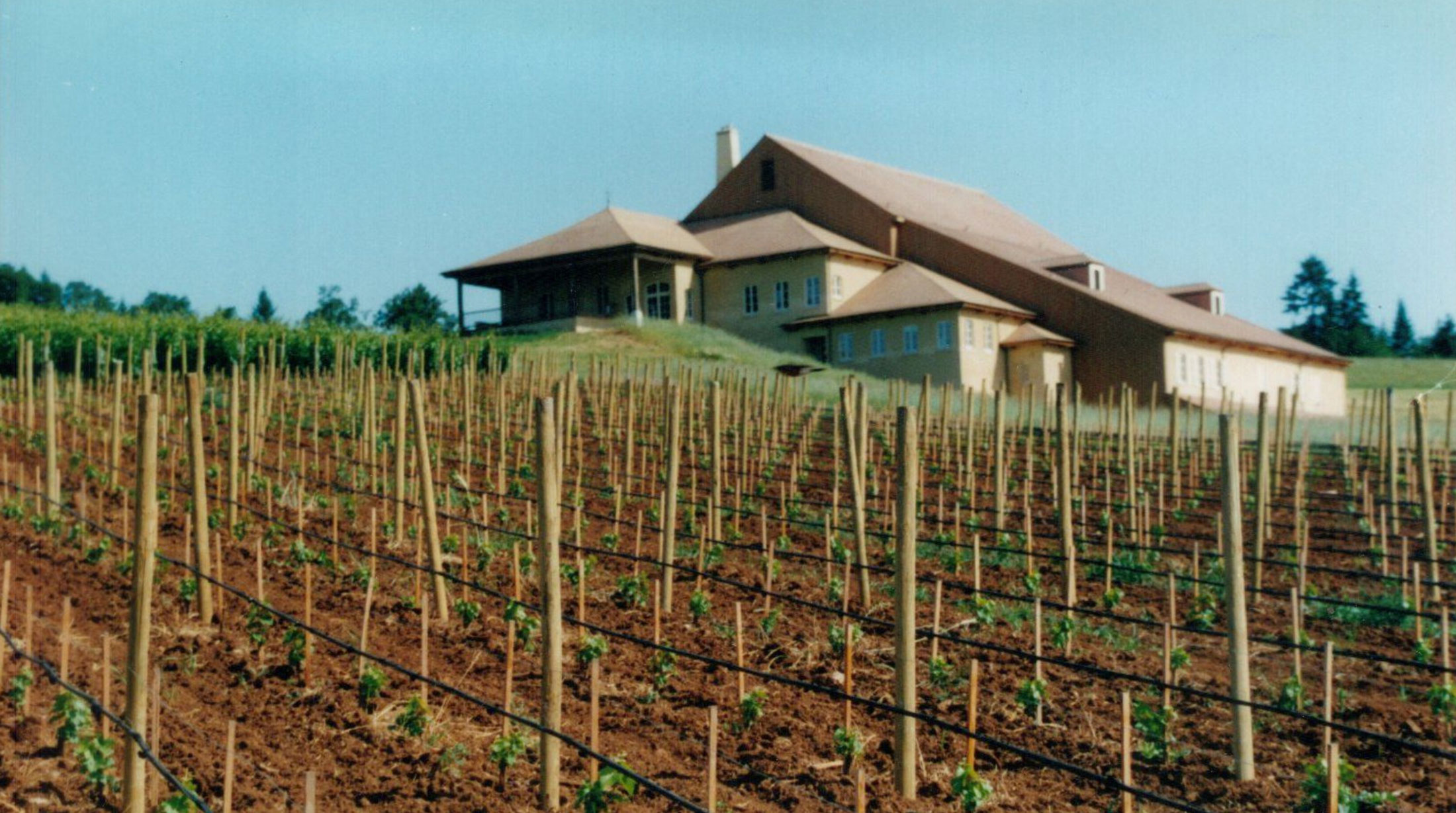 Original DDO winery with young grapevines